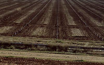 plantaciones-3